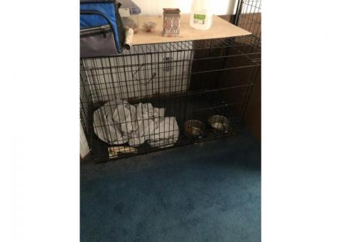 Dog cages (2.5 x 4.5)